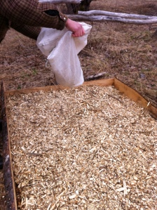 5. second layer of woodchips