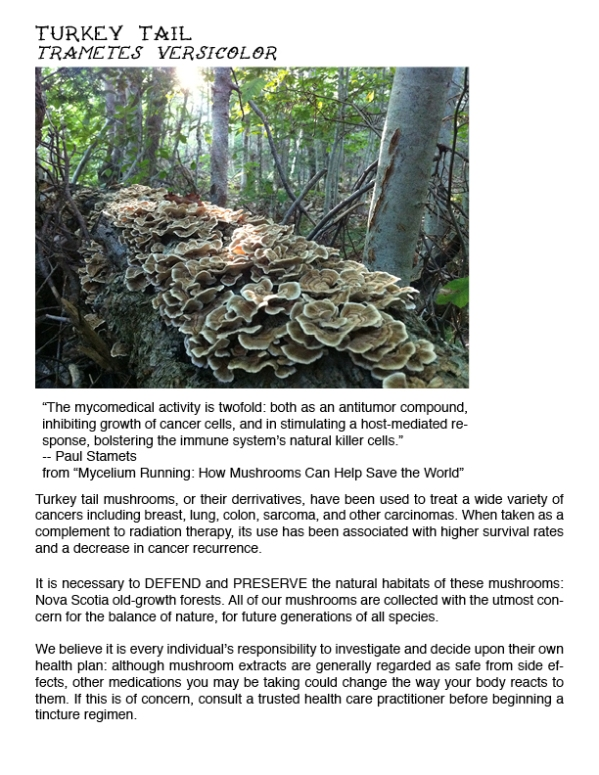 Mushrooms and Cancer for webpage4